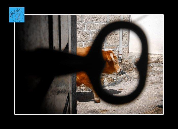 presentacion  Abel Blanco Fotógrafo