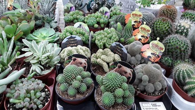 Selección de cactus