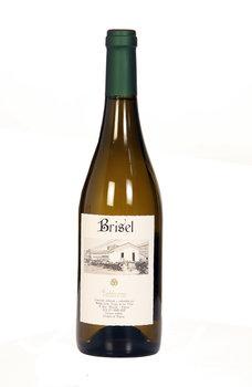 Brisel Blanco