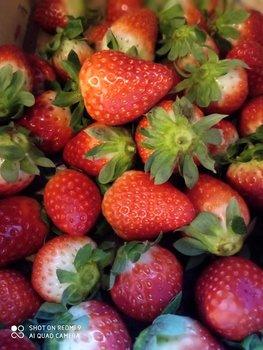 Fruta variada de temporada
